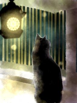 Cat watching the night