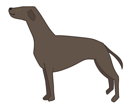 Greyhound Gray