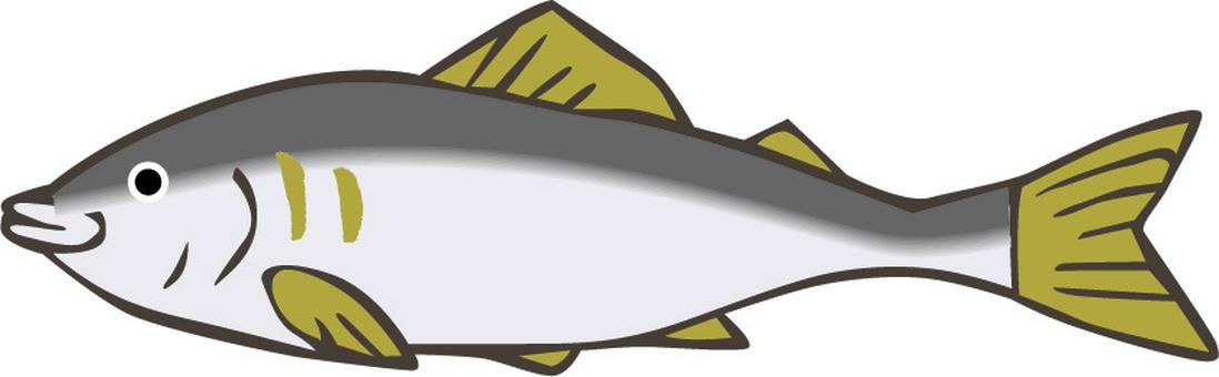 Ayu Ayu River fish