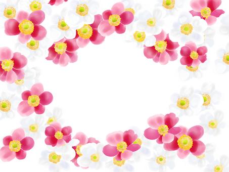 Shu-chiku (Shumayigiku) White Pink