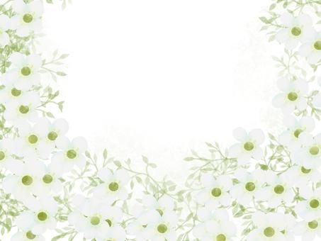 Saxifraga White Frame