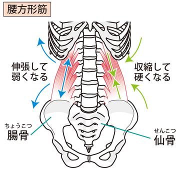 Waist square ribs