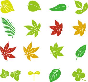 나뭇잎 다양한