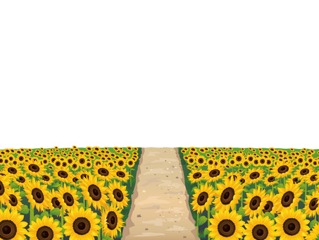 (RGB) Summer sunflower field and hot spring
