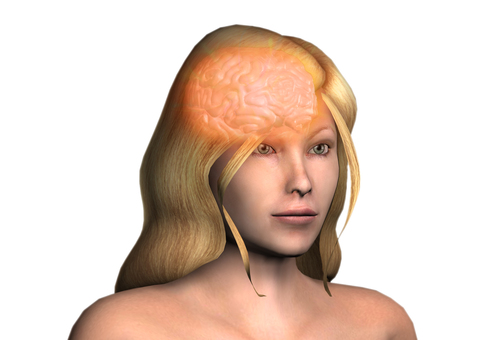 뇌의 CG 이미지 _005