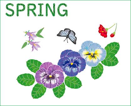 春天三色紫羅蘭