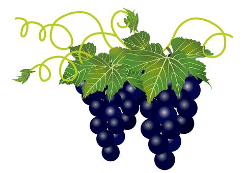 Delicious grape 4