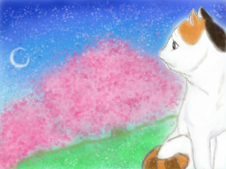 Cats and cherry blossoms