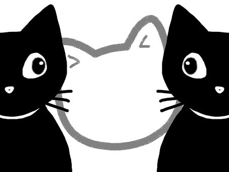 Cat frame animal black cat
