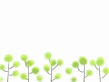 Conifer 2