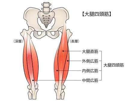 Thigh four ribs