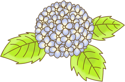 AS plant hydrangea 1 flower color 1 leaf color 1