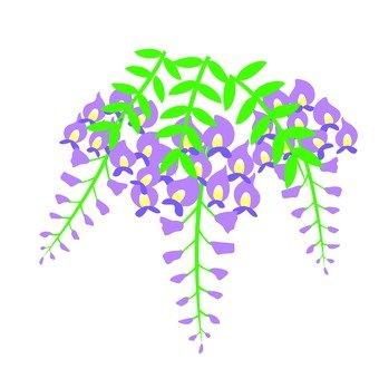 Fuyu's flower