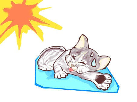 Cat heat stroke