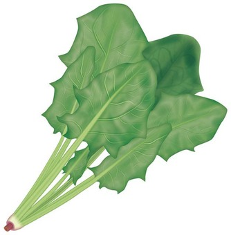 Spinach 1 / Vegetable