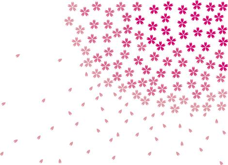 Cherry blossoms_ petal_large