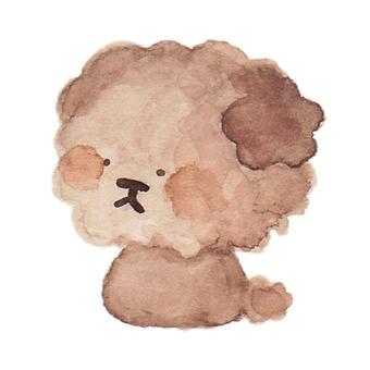 Toy poodle whole sideways