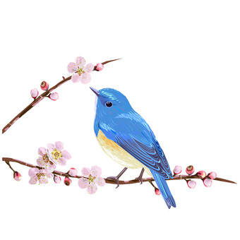 Plum blossom and blue bird without background