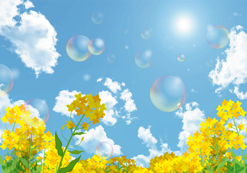 Rape flower and blue sky with soap bubble