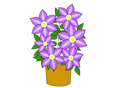 클레 마티스 ~ 꽃다발 꽃 선물
