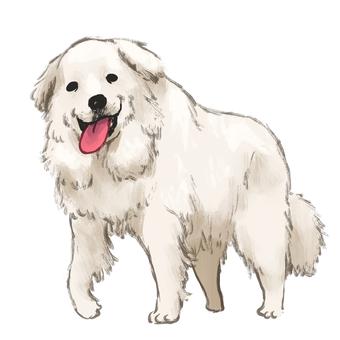 Pyrenees dog