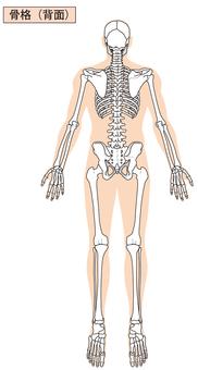 Full body skeleton (back)