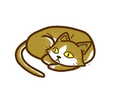 一隻貓正在轟隆隆。