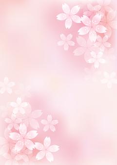 벚꽃의 꽃 17