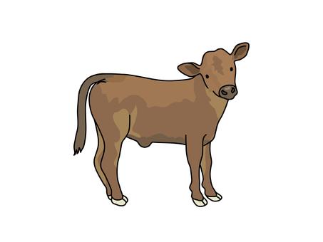 Wagyu Beef (calves)