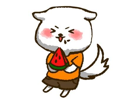 白狗(吃西瓜)