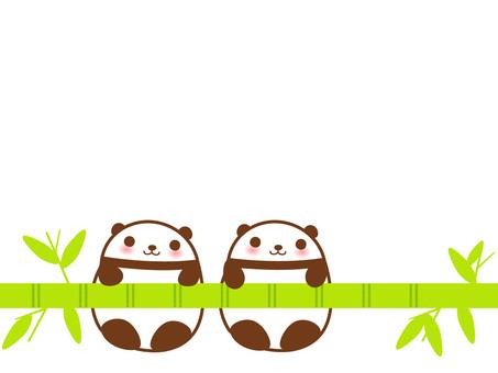 Sasa panda