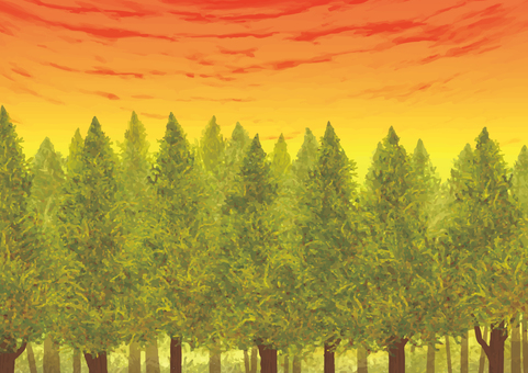 Evening forest