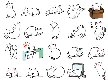 Assorted white cat 1