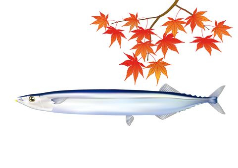 Sanma and autumn leaves _ 02
