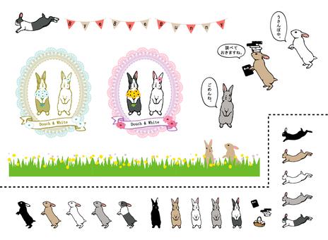 Rabbit assortment