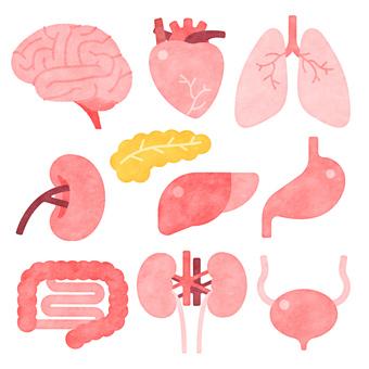Various organs
