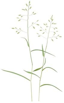 코스즈메가야 / 잡초