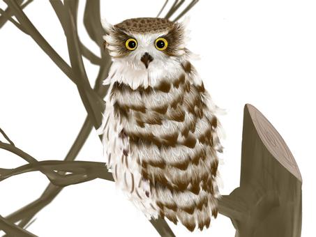 Shima Owl②