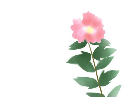 Hibiscus (フ ヨ ウ) 9