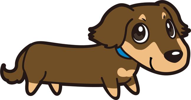 Dog _ Miniature Dachshund