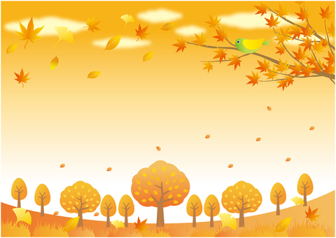 Sunset sky and scenery of fallen leaves