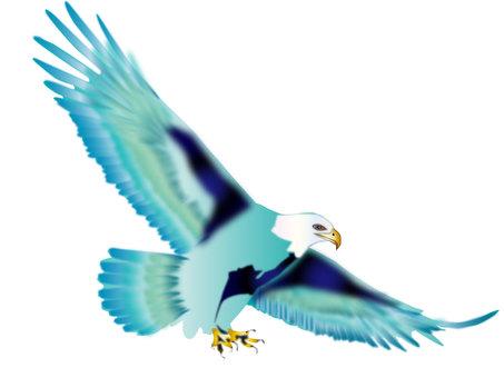 독수리 12