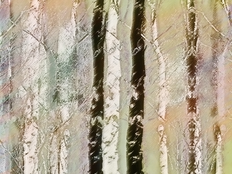 White birch forest in winter
