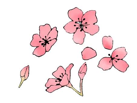 벚꽃의 꽃잎 4
