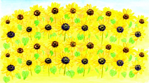 【Handwritten】 Sunflower field