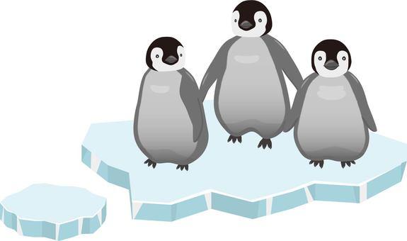 Emperor penguin chicks ice