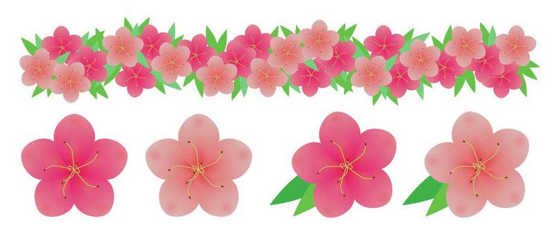 Azalea Azalean Flower