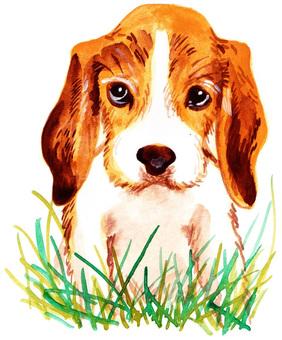 Grass beagle