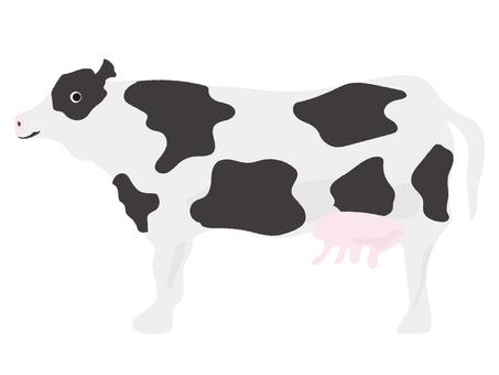소 젖소 1