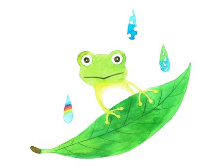 Rain frog and leaves and rain